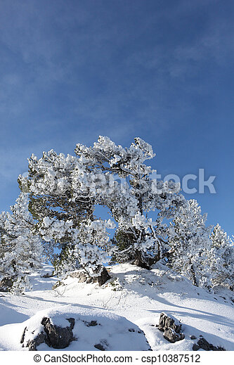Bush covered in snow - csp10387512