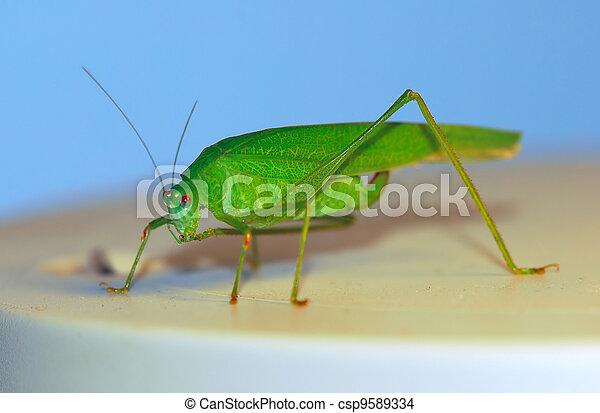 bush-cricket - csp9589334