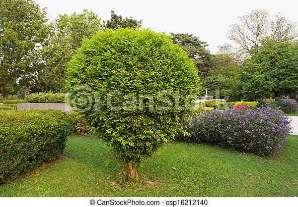 bush in garden - csp16212140