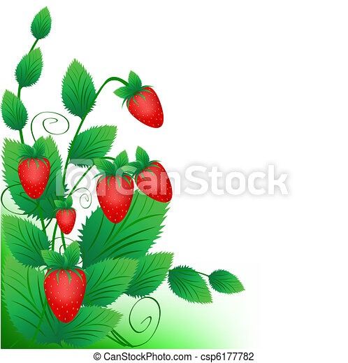 Bush of a ripe red strawberry on a white background - csp6177782