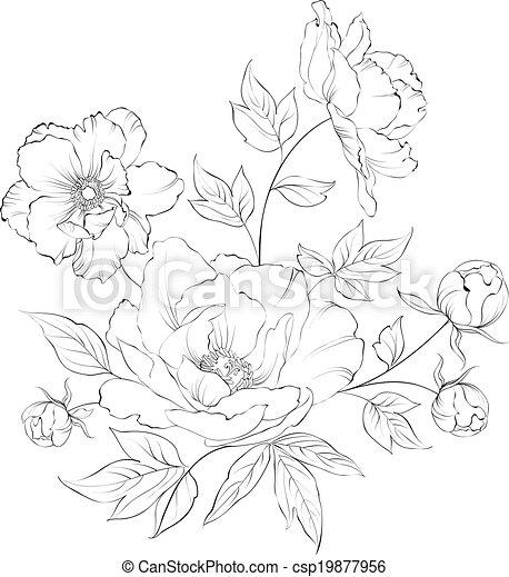 Bush of beautiful peonies. - csp19877956