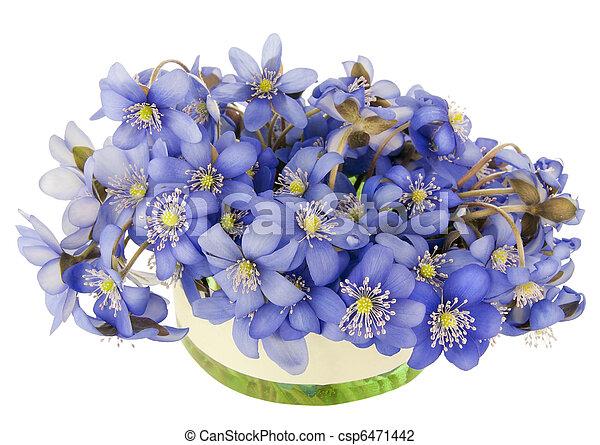 Bush of springs flowers on spot bush of first blue wild stock bush of springs flowers on spot csp6471442 mightylinksfo