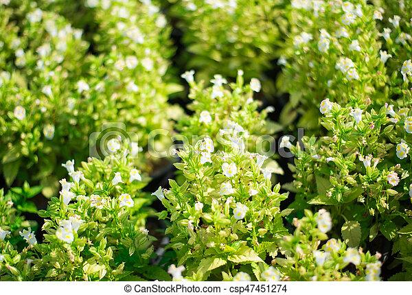 Bush of white flowers mightylinksfo
