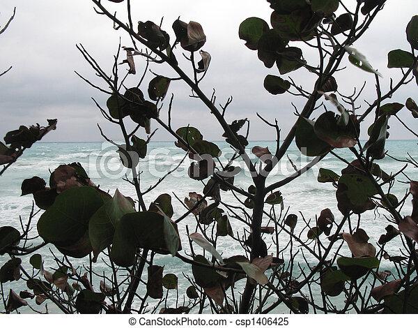 bush - csp1406425