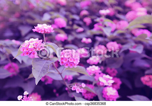 Bush with pink flowers beautiful bush with pink blooming claster bush with pink flowers csp36835368 mightylinksfo