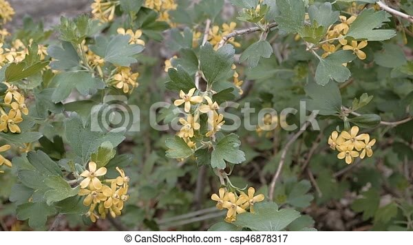 Bush with small yellow flowers blooming in springtime footage bush with small yellow flowers blooming in springtime footage blooming bush with small yellow flowers moving on wind in springtime mightylinksfo