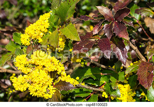 Bush with yellow flowers studio photo stock photo search pictures bush with yellow flowers csp48100023 mightylinksfo Images