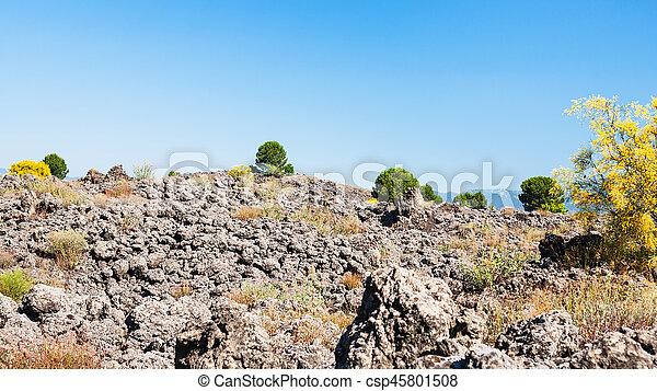 bushes on petrified lava flow after Etna eruption - csp45801508