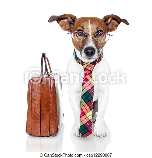 business dog with a leather bag - csp12290007