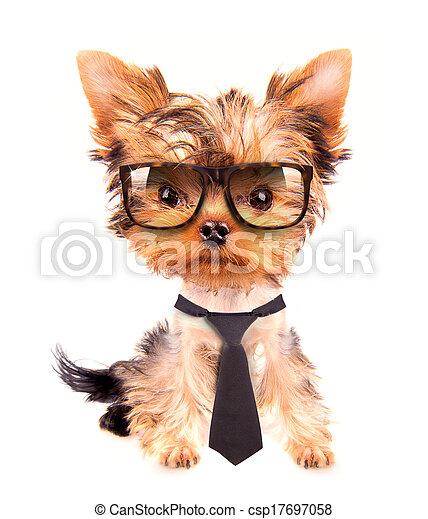 business dog with tie and glasses - csp17697058