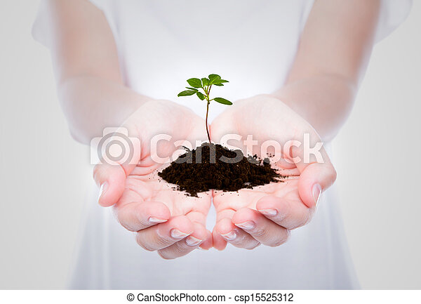 Business hand holding green small plant - csp15525312