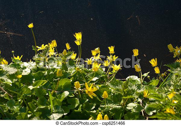 buttercups - csp6251466