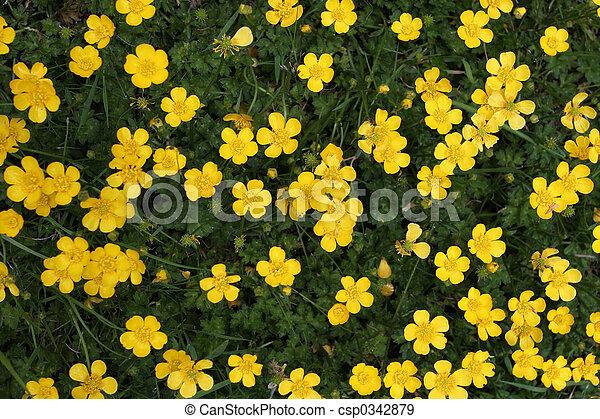 Buttercups - csp0342879