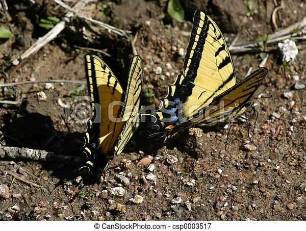 Butterflies 4545 - csp0003517