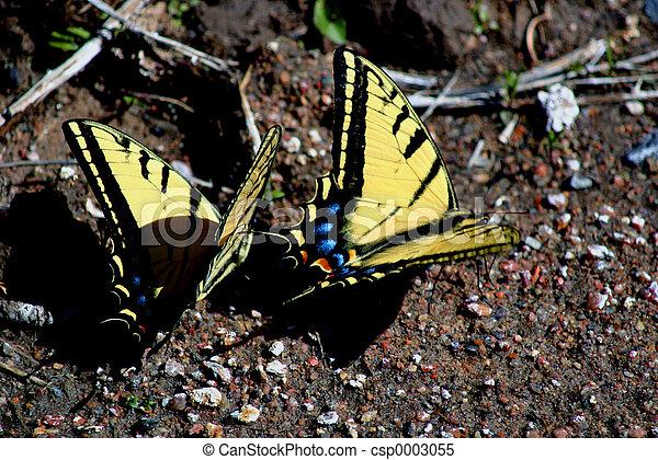 Butterflies 4546 - csp0003055