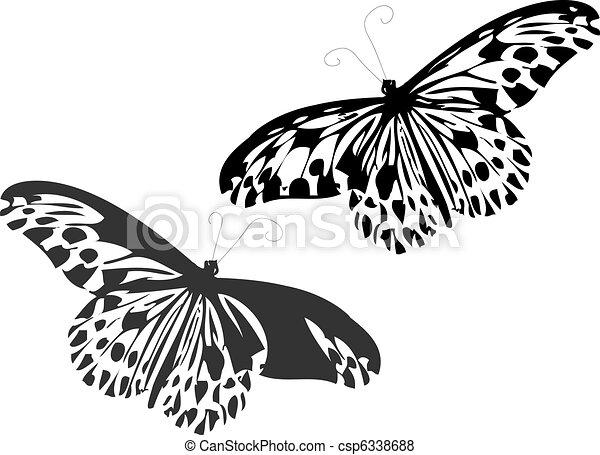 Butterflies  - csp6338688