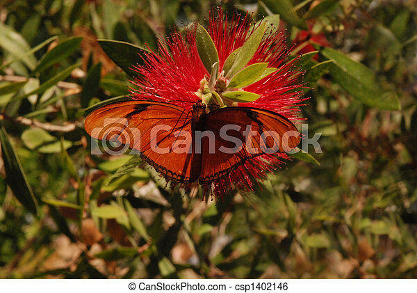 Butterfly and Bottle Brush - csp1402146