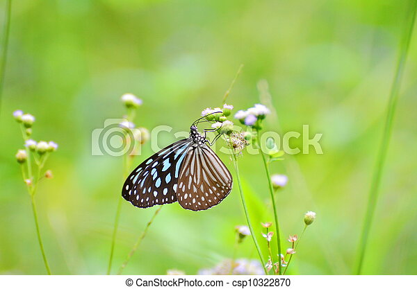 butterfly and flower - csp10322870