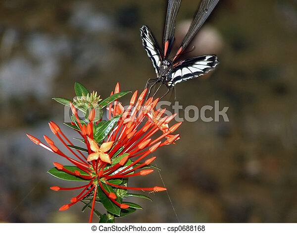 butterfly and flower - csp0688168
