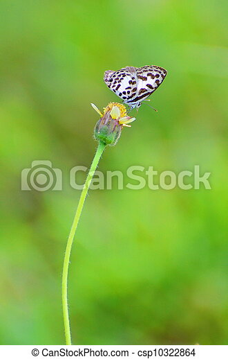butterfly and flower - csp10322864