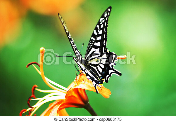 butterfly and flower - csp0688175