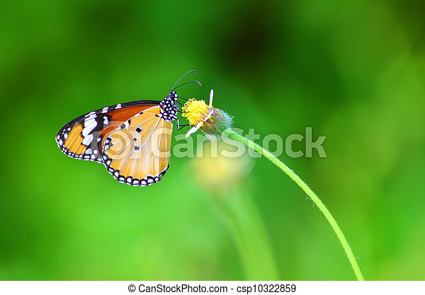 butterfly and flower - csp10322859