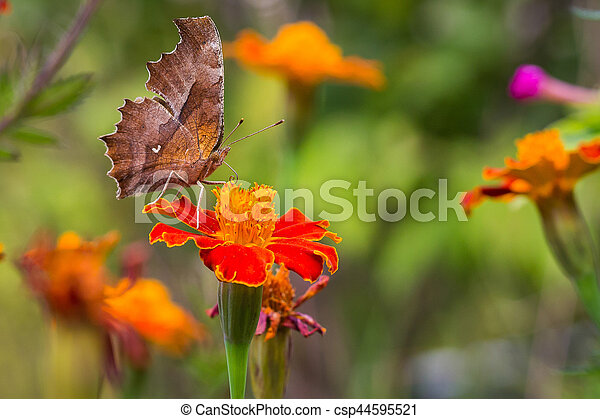 Butterfly and flower. - csp44595521