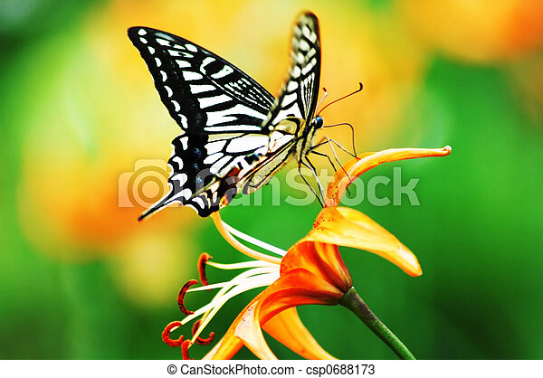 butterfly and flower - csp0688173