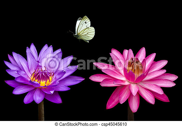 1e5ccb462 Butterfly and water lily close-up. Water lily flower with butterfly ...