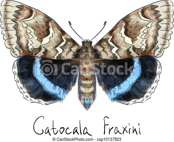 Butterfly Catocala Fraxini. Watercolor imitation.  - csp10137823