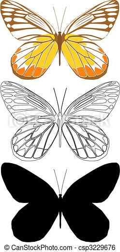butterfly - csp3229676