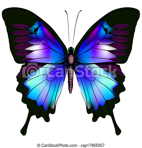 Butterfly - csp17955057
