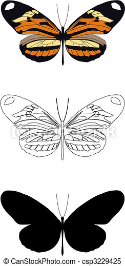 butterfly - csp3229425