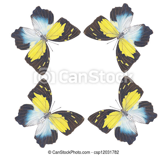 butterfly dancing - csp12031782