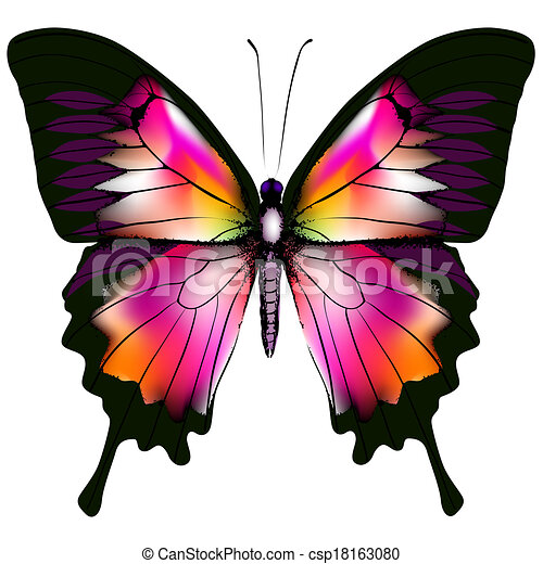 Butterfly - csp18163080