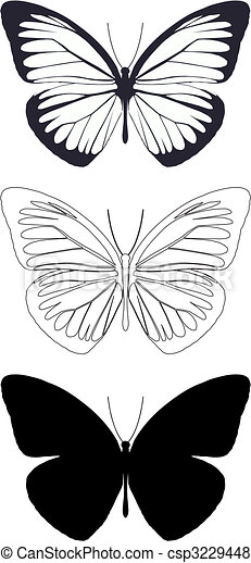 butterfly - csp3229448