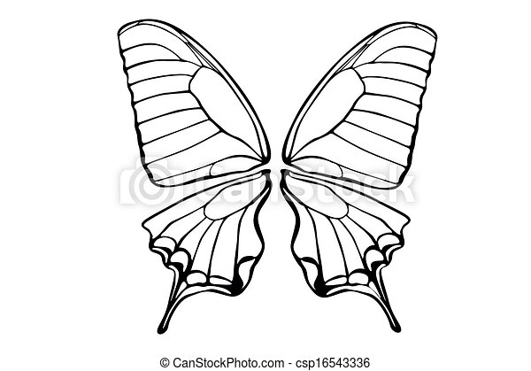 butterfly - csp16543336
