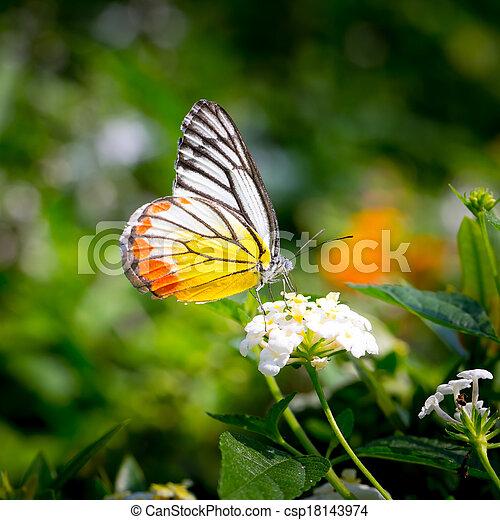 butterfly fly in morning nature. - csp18143974