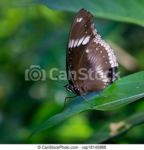butterfly fly in morning nature. - csp18143988