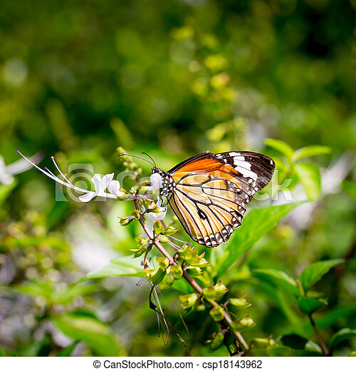 butterfly fly in morning nature. - csp18143962