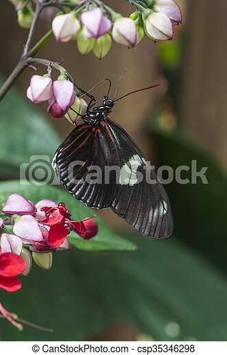 butterfly fly in morning nature - csp35346298