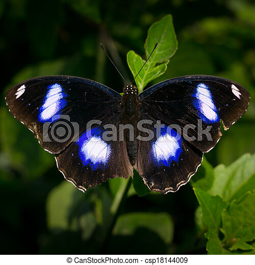 butterfly fly in morning nature. - csp18144009