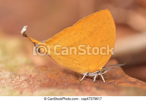 butterfly fly in nature. - csp47379617