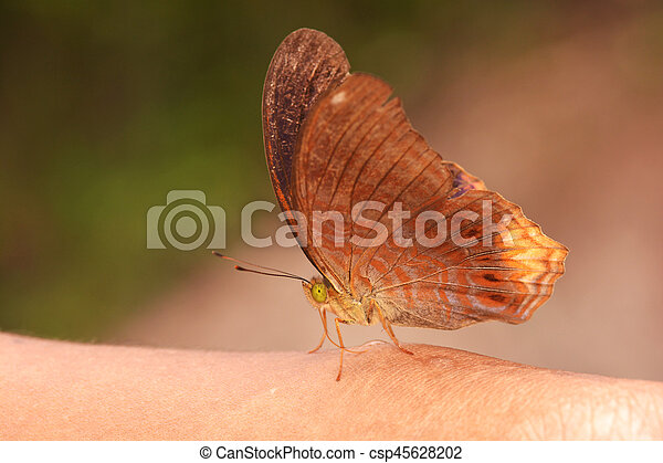 butterfly fly in nature. - csp45628202