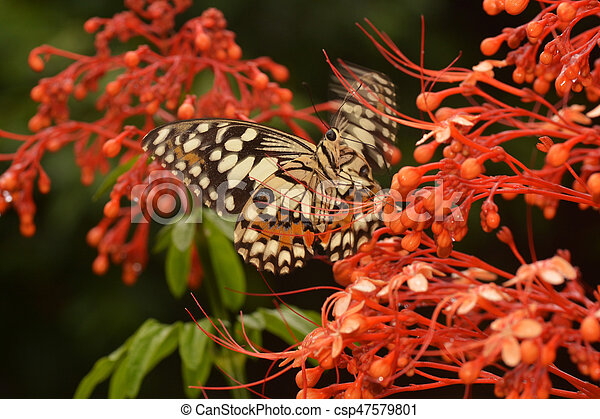butterfly fly in nature. - csp47579801