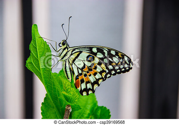butterfly fly in the Garden - csp39169568