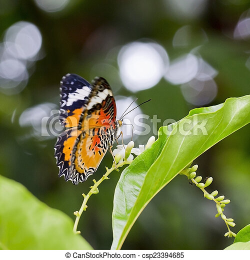 butterfly fly - csp23394685