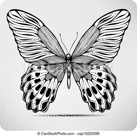 Butterfly Hand Drawing Vector Illustration