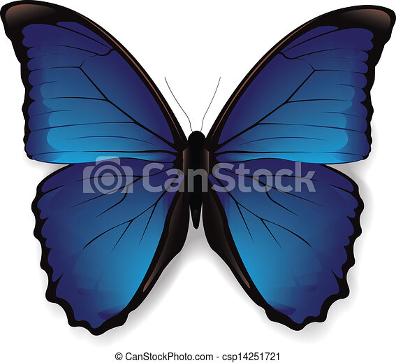 Butterfly - csp14251721