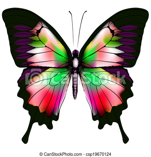 Butterfly - csp19670124